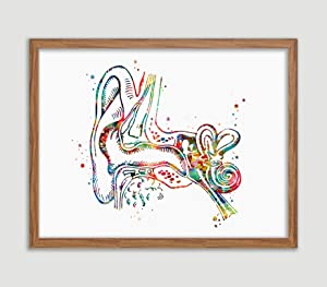 Human Ear Anatomy Watercolor Poster Art Print Audiology Specialist Cross Section Clinic Hearing Office Decor Audiologist Gifts