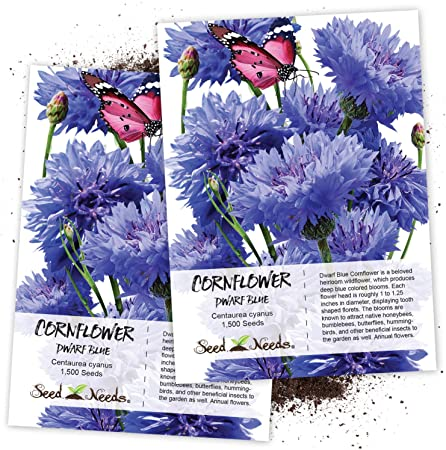 CORNFLOWER BACHELOR/'S BUTTON DWARF MIXED COLORS Centaurea Cyanus 500 Seeds