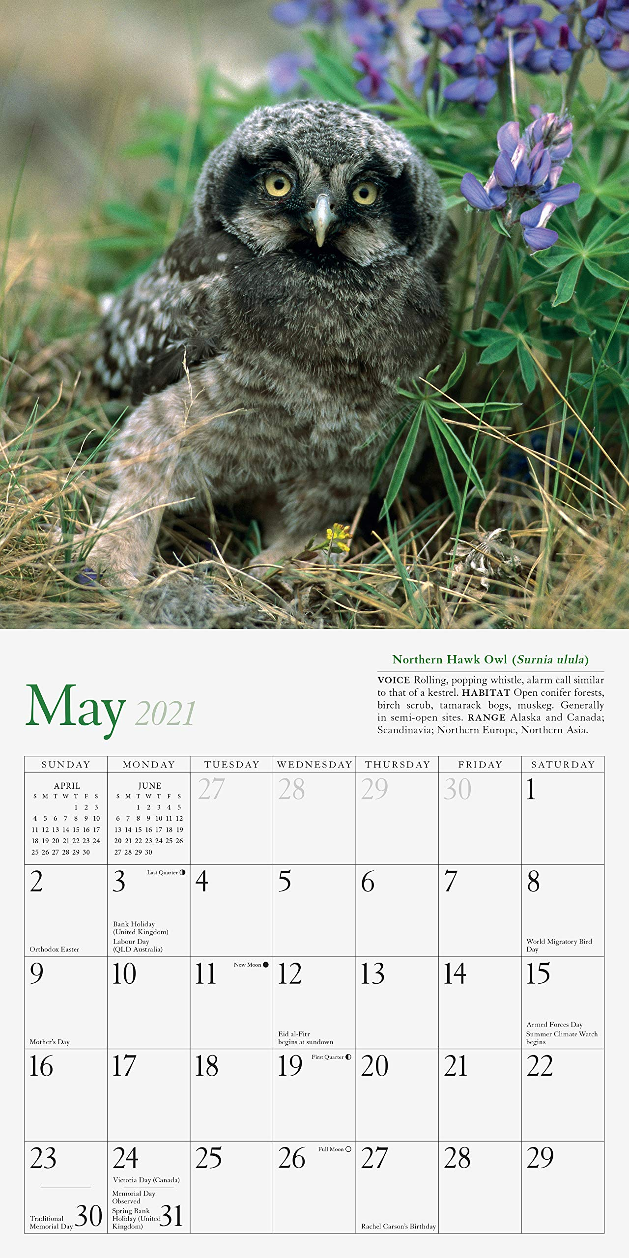 OWL LOVERS OWLS  2021 MINI MAGNETIC CALENDAR TEAR OFF PAGES