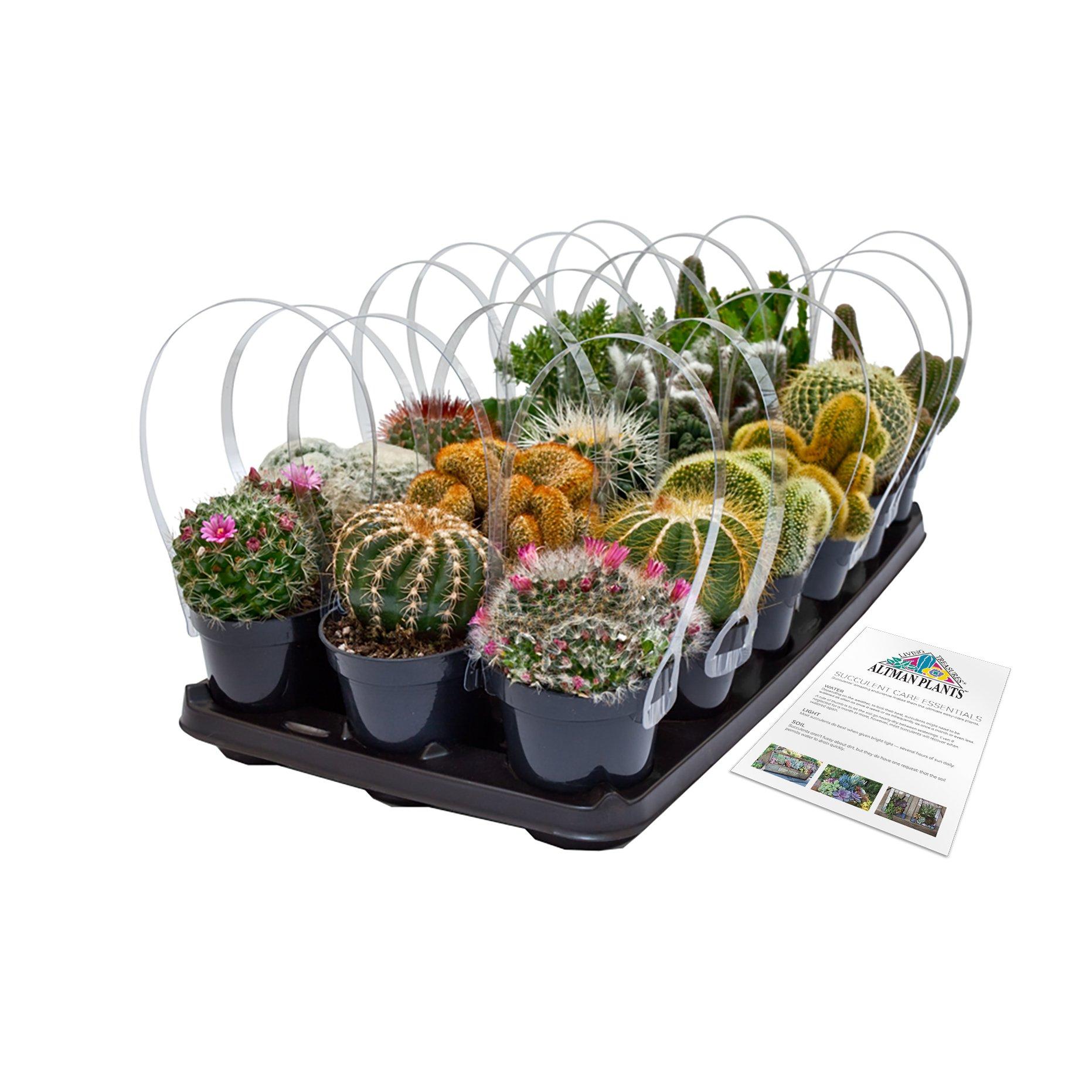 Altman Plants Assorted Cacti 18 Pack, 3.5''