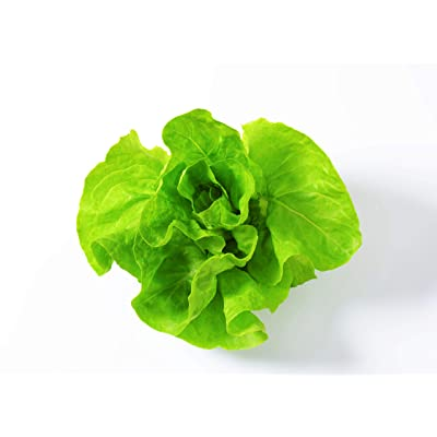Lettuce Seeds for Planting - Sprouting - Microgreens - 1000 Vegetable Seeds in Biodegradable Compostable Packets - Buttercruch Lettuce! : Garden & Outdoor