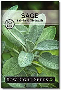 Sow Right Seeds - Sage Seeds for Planting - Non-GMO Heirloom Sage Seeds with Instructions to Plant and Grow Kitchen Herb Garden, Indoor or Outdoor; Great Garden Gift (1)