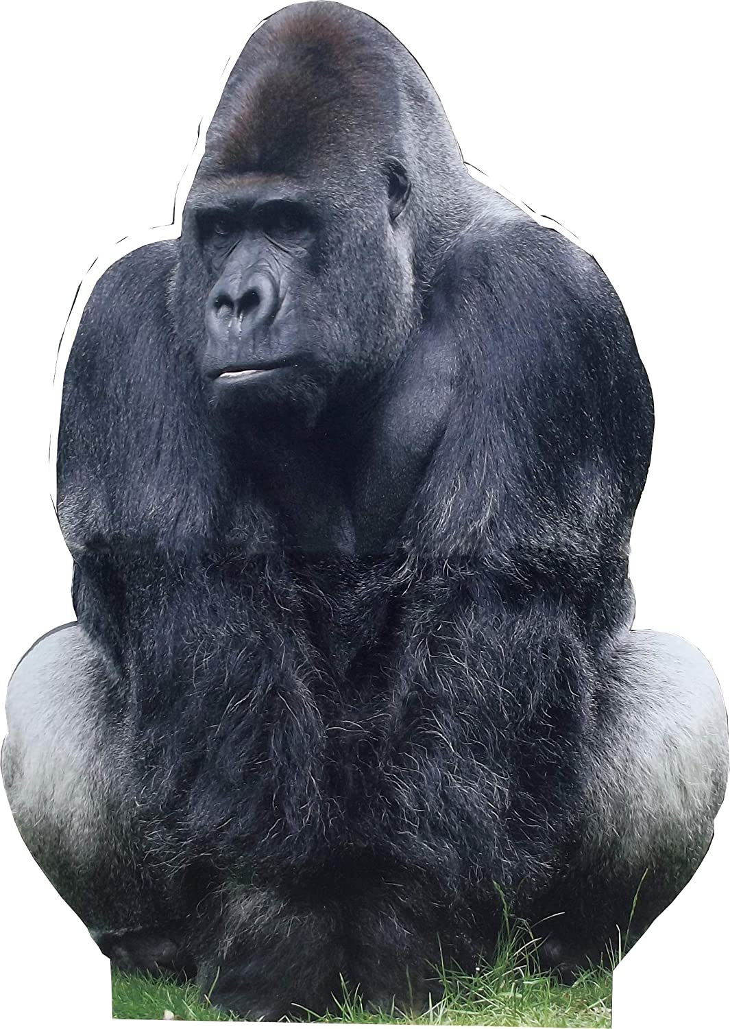 aahs!! Engraving Animal Life Size Cardboard Cutout Stand Up | Standee Picture Poster Photo Print (Gorilla)