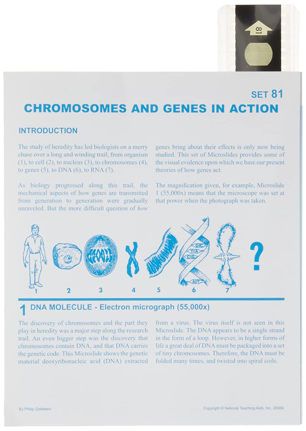 American Educational Microslide Chromosomes and Genes in Action Lesson Plan Set