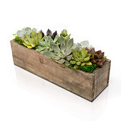 Hallmark Flowers Succulent Garden In 10-Inch Wood Trough : Grocery & Gourmet Food
