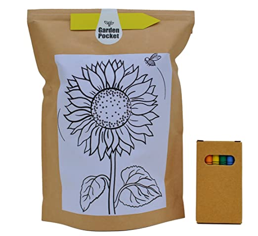 Kit Educo Girasol: Amazon.es: Jardín