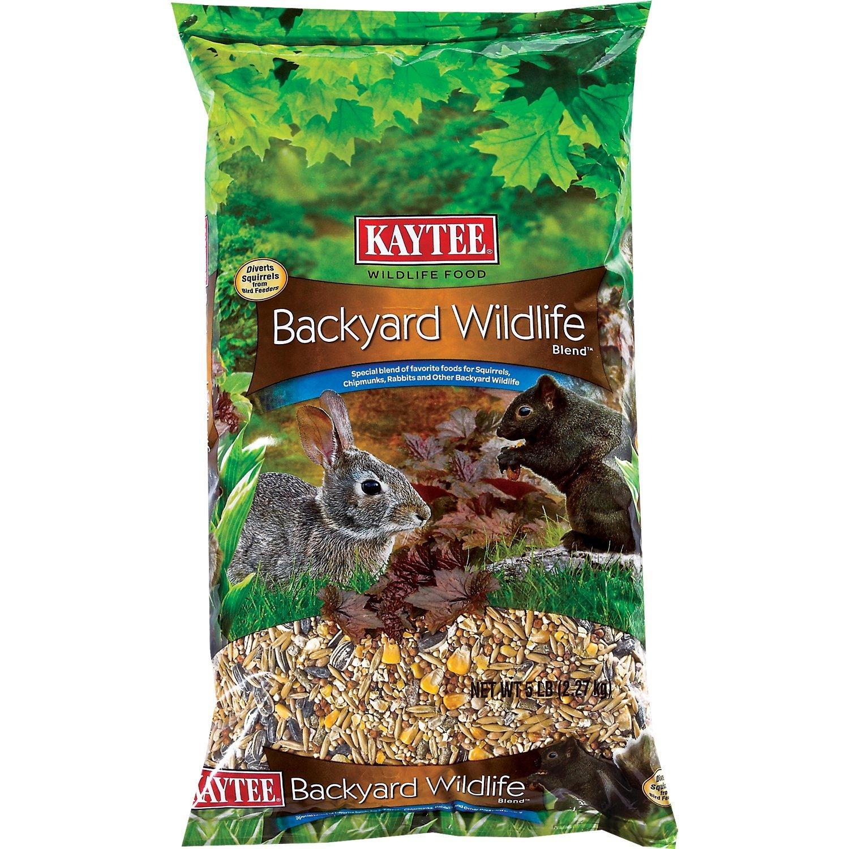 amazon com squirrels backyard birding u0026 wildlife patio lawn