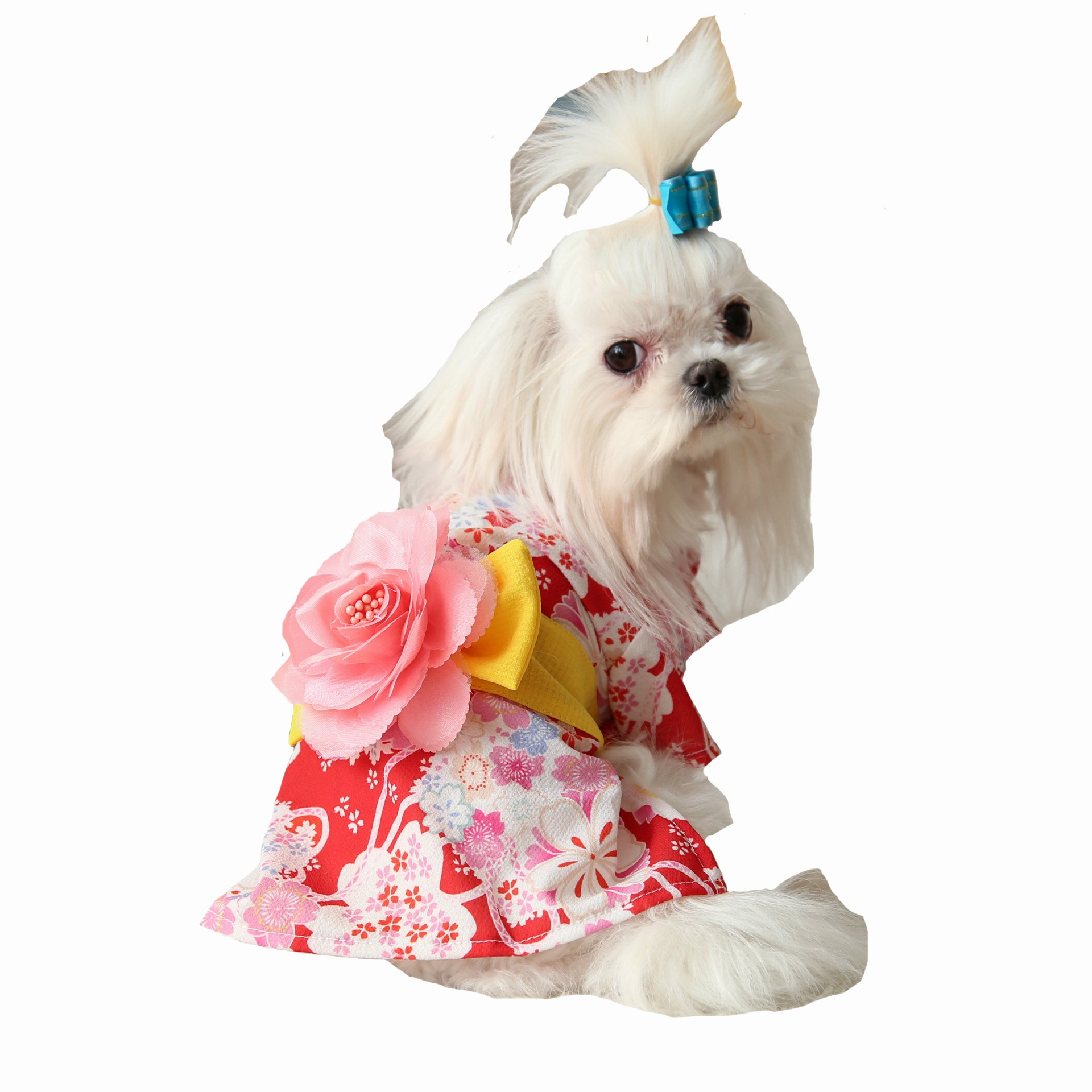 Dog Dress Kimono ,Pet Dress with Printed Floser for S/M/L Pets with Fastener Closure By BONAWEN(Red,M)