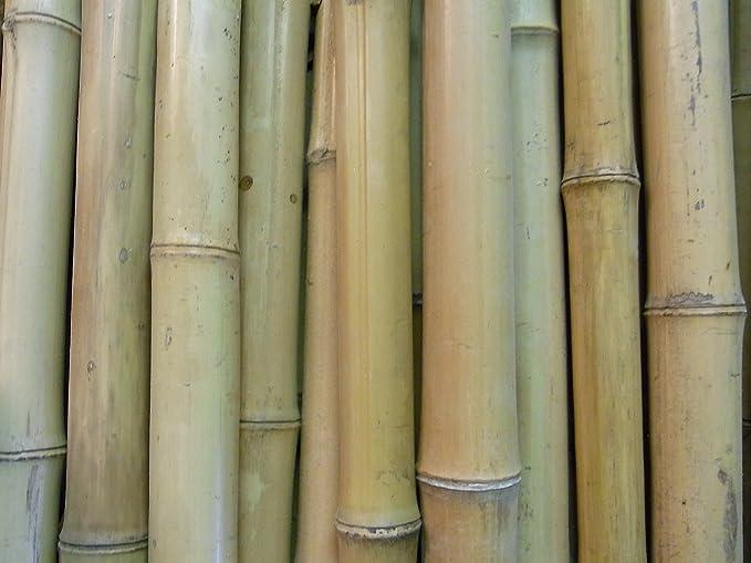 Bambusrohr  6-7 cm 2m Bambusrohre Bambusstange Bambusstangen Bambushalm Bambus