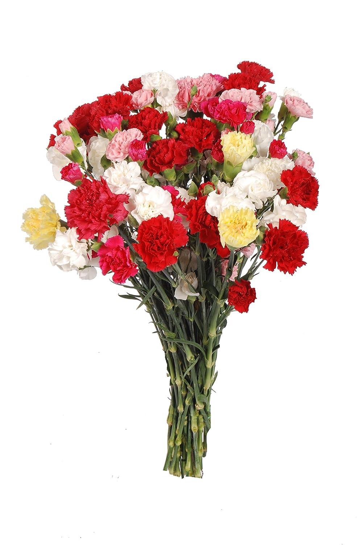 Amazon Fresh Flowers Mini Carnations Flower Bouquet 25