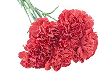 amazon com red carnation bouquet 6 stems without vase