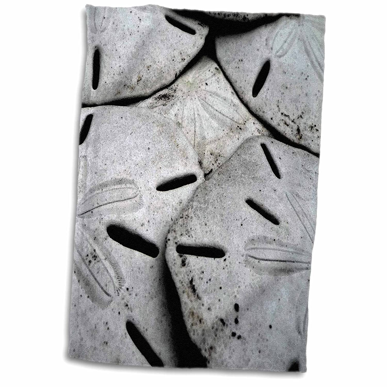 3D Rose Sand Dollars TWL/_181353/_1 Towel 15 x 22
