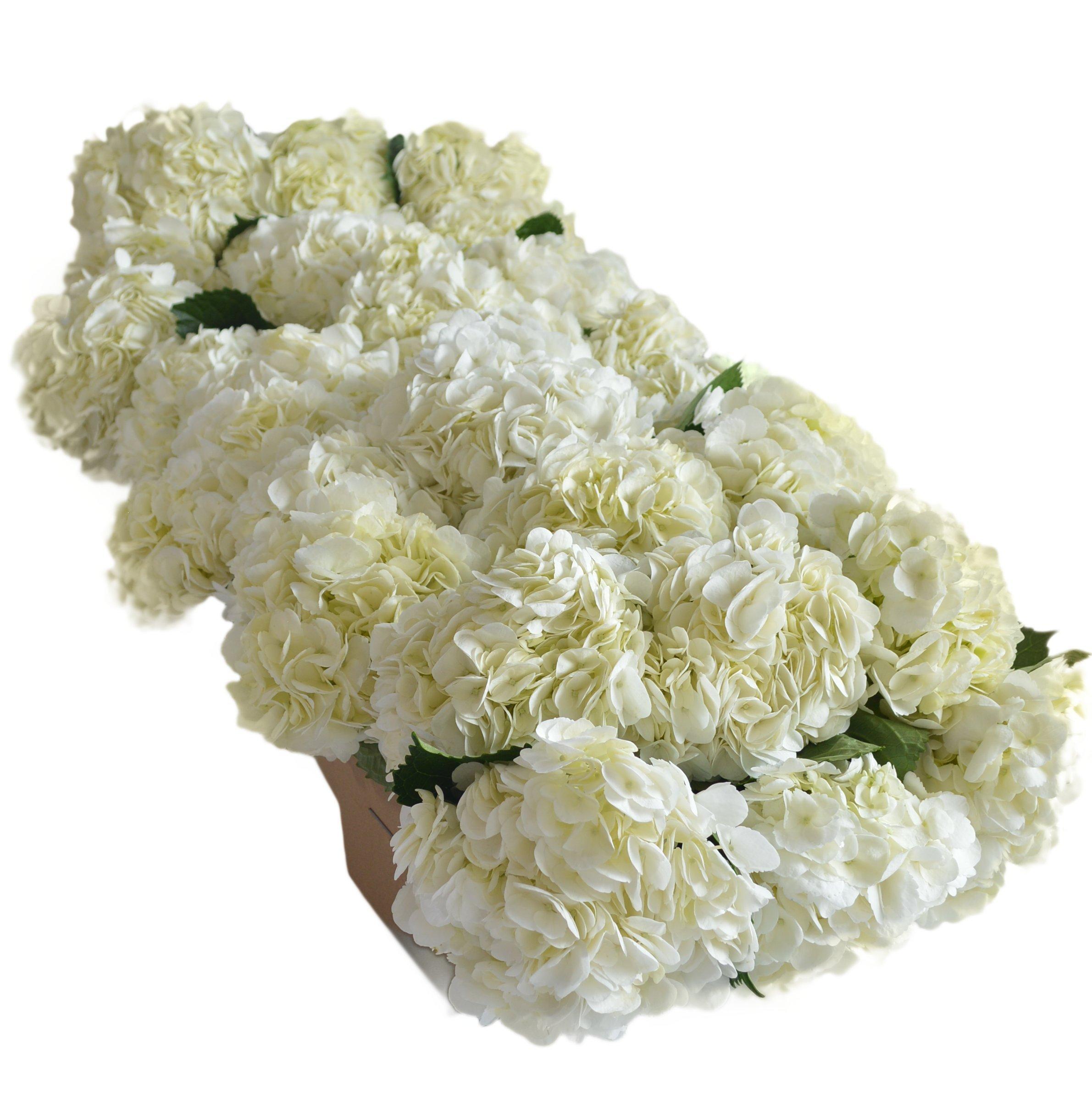 Amazon Farm2door Wholesale Roses 100 Fresh White Roses Long