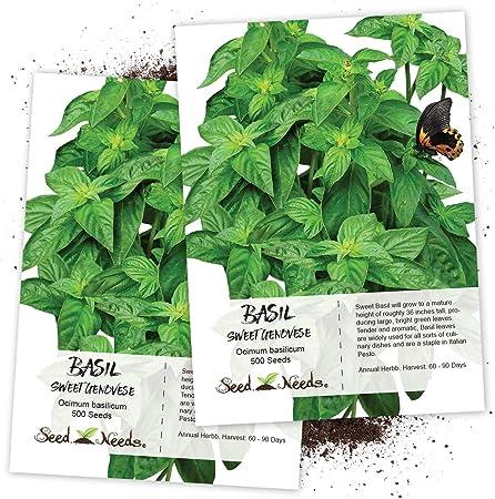500 semillas mejorana-oreganum Majorana
