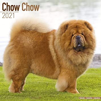 Qc Calendar 2021 Amazon.: Chow Chow Calendar 2021   Dog Breed Calendar   Wall