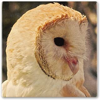 product image for Bird - Barn Owl Wooden Coaster