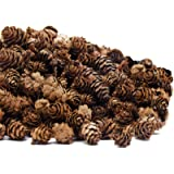 Deloky 250 PCS Christmas Natural Mini Pine Cones-Thanksgiving Pinecones Ornaments for DIY Crafts, Home Decorations ,Fall and