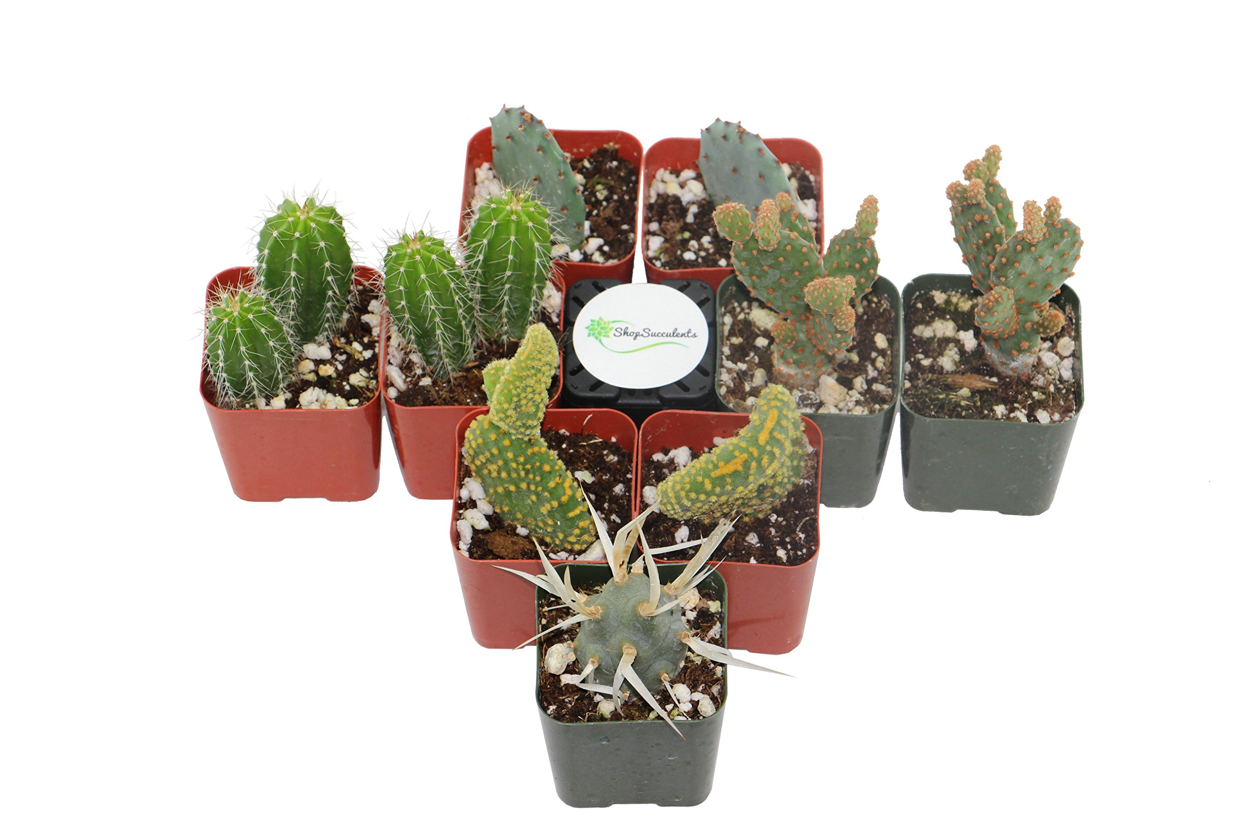 Shop Succulents Cactus (Collection of 9)