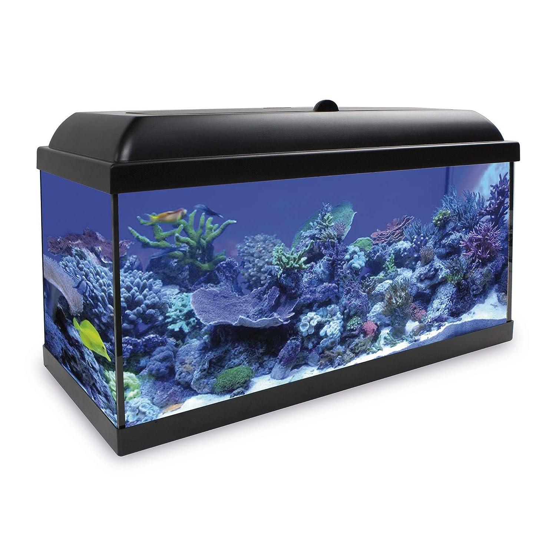 ICA KHS120N Kit Hydra 120 para Agua Salada: Amazon.es: Productos para mascotas