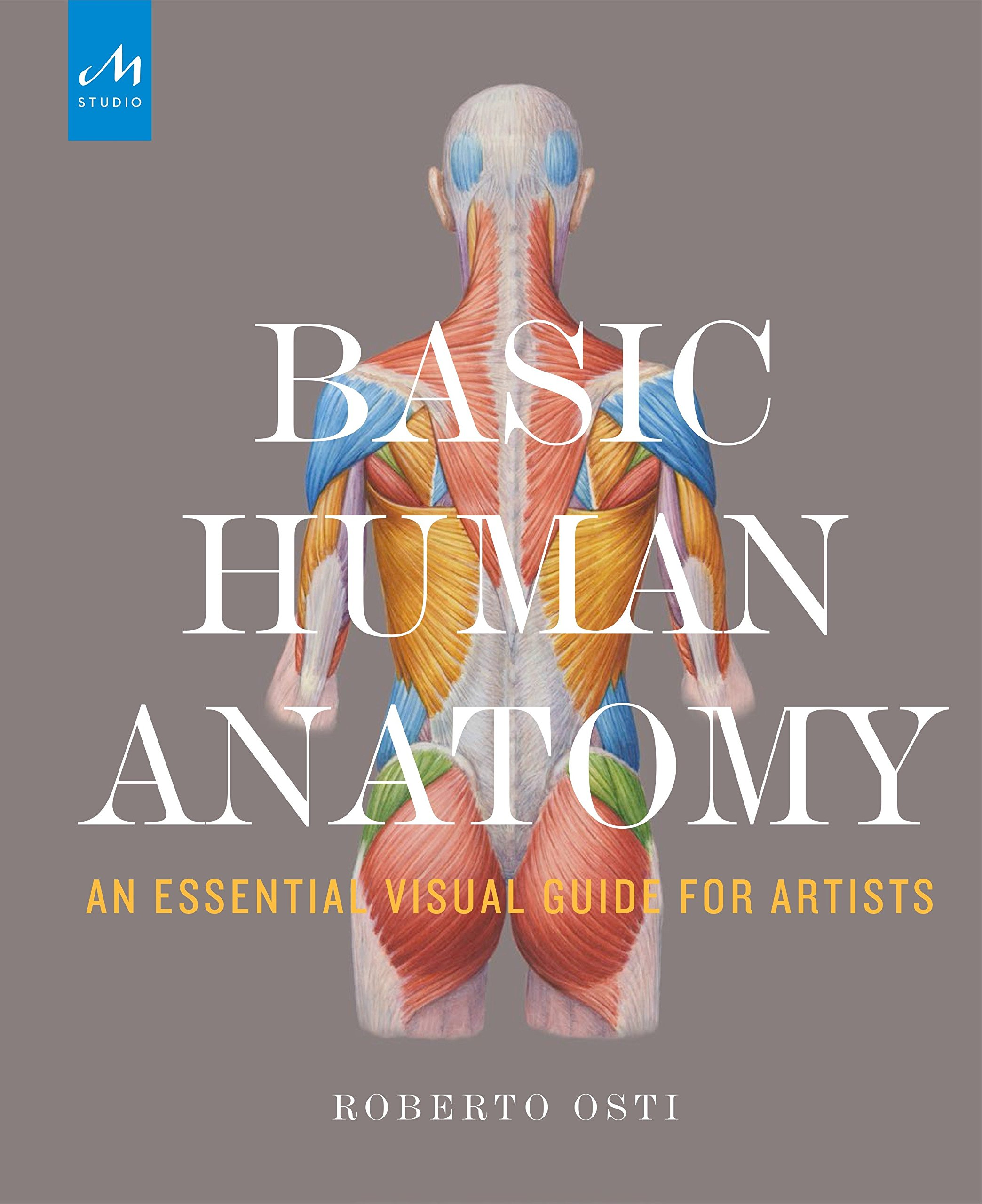 Amazon Basic Human Anatomy An Essential Visual Guide For