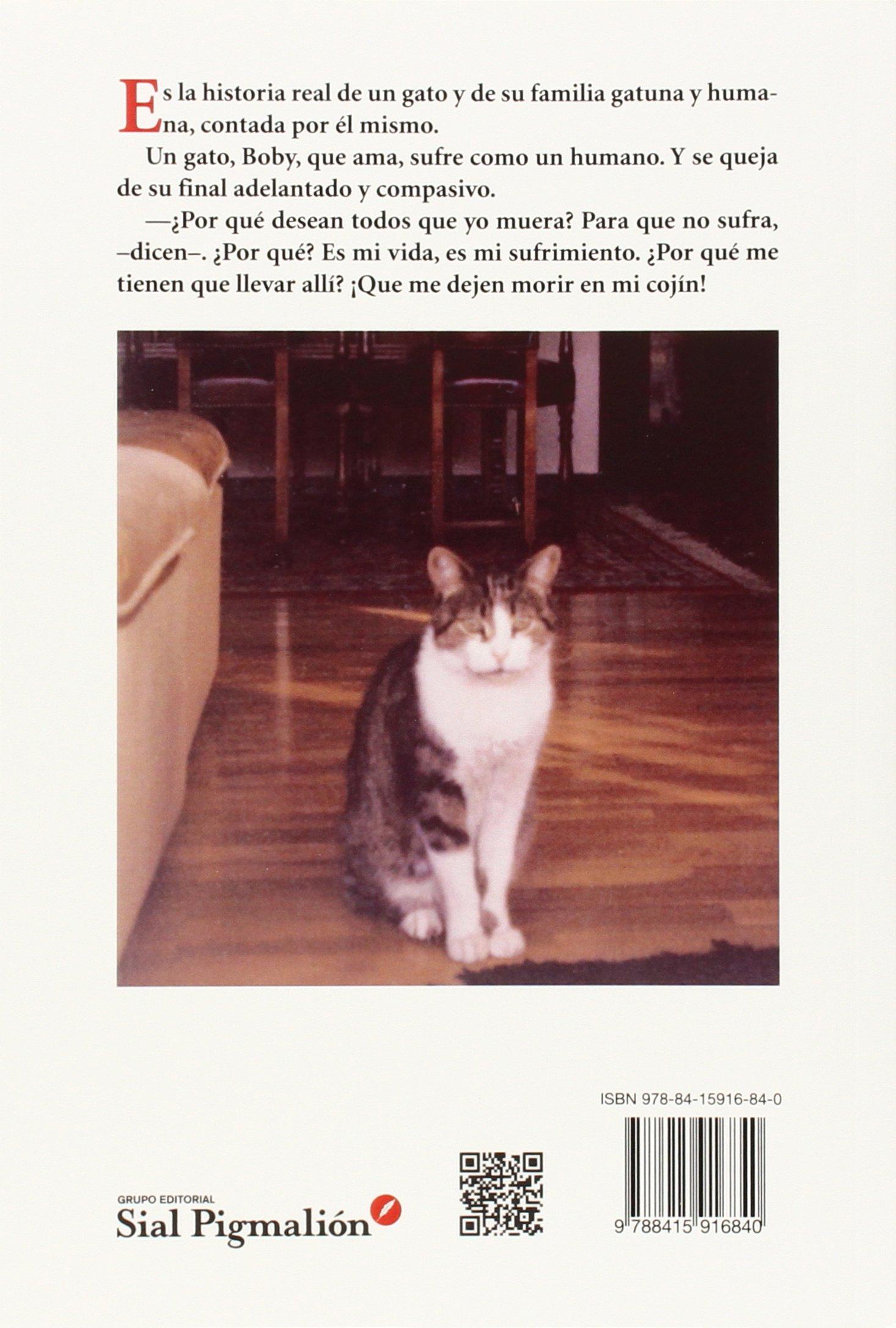 Solo soy un gato: Ángeles Valero Lasheras: 9788415916840: Amazon.com: Books