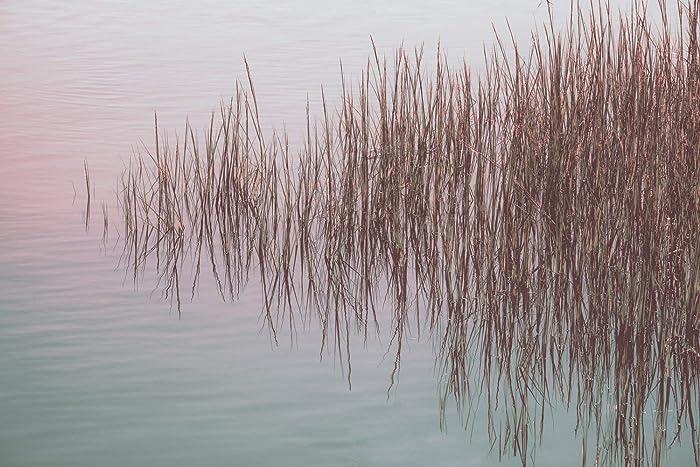 Amazon Com Marsh Grass Reflection Pond Photography
