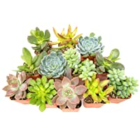Deals on 12-Pk Plants for Pets Fully Rooted Succulent Plants