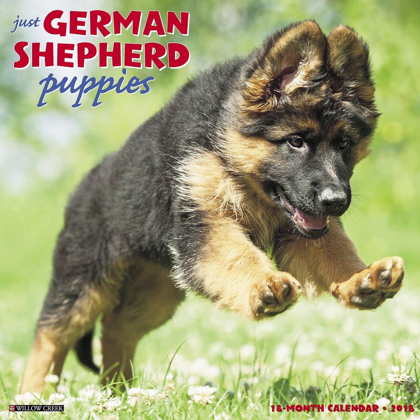 Just German Shepherd Puppies 2018 Calendar Willow Creek Press