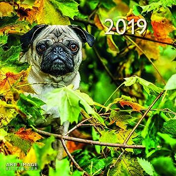 Coloriage De Chien Carlin.Calendrier 2019 Chien Carlin Avec Poster Chien De Race