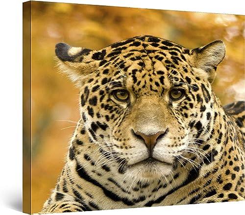 Startonight Canvas Wall Art Jaguar