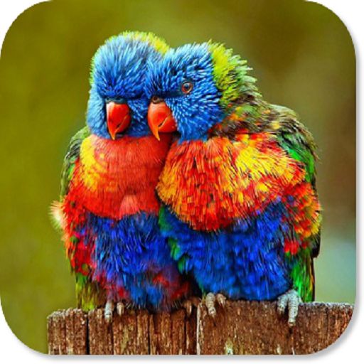 Amazon Com Birds Hd Wallpapers