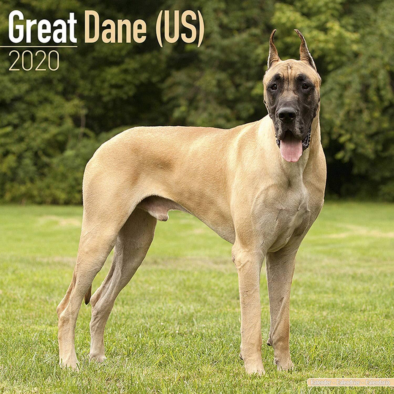 Qrm Calendrier.Great Dane Calendar 2020 Dog Breed Calendar Wall Calendar 2019 2020