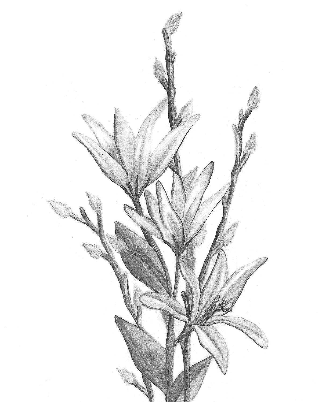 Set of Three Home D/écor Botanical Hand Drawn Flowers Unframed, 8x10