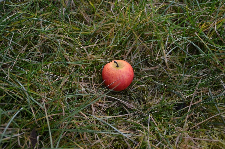 wasserdicht Rite in the Rain Log Apfel mit Nano und Logstreifen Ausgefallenes Geocaching Versteck