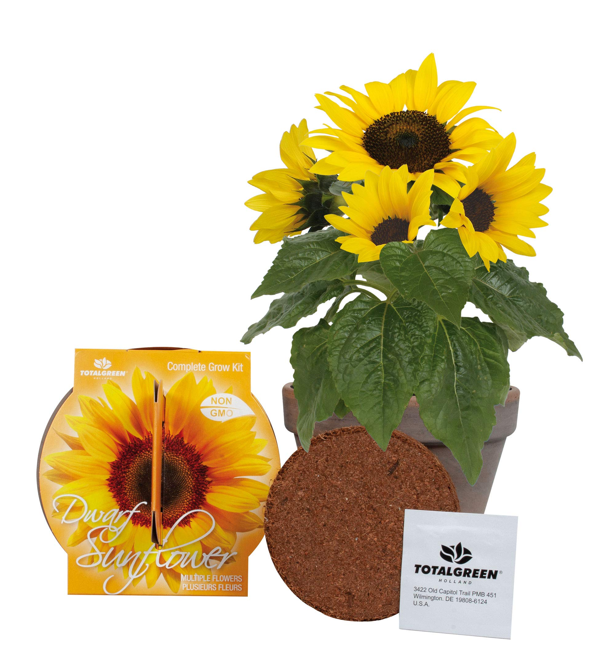 Quality Sunflower Grow Kit | Grow Your Own Unique Dwarf Sunflower from Seed in Just A Few Weeks | Unique Basalt Pot, Non-GMO Mother's Day Gardening Kit with Easy Instructions |