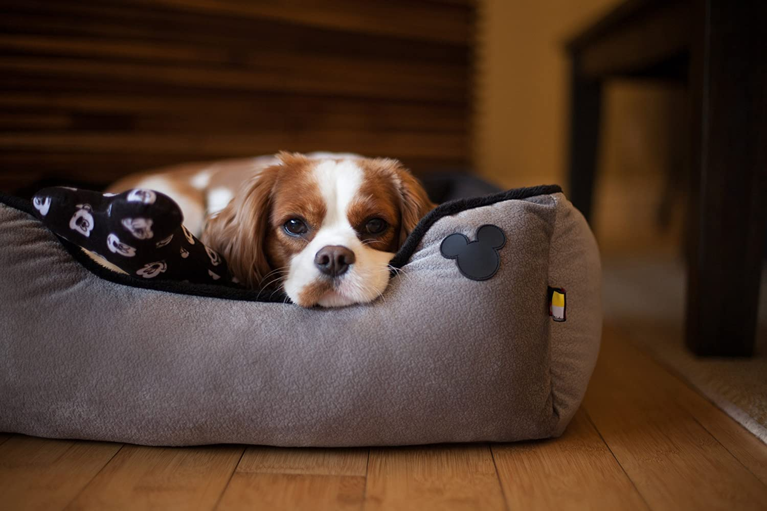 Amazon.com : Disney Mickey Mouse Rectangular Cuddler with Toy Bone, Gray, 24 x 22/One Size : Pet Supplies