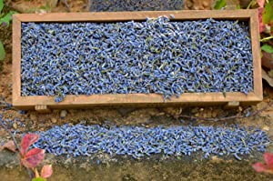 16 Ounces, Dried Lavender Buds - Lavandula Dentata - Highland Lavender Flower Buds