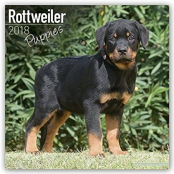 rottweiler puppies calendar dog breed calendars 2017 2018 wall