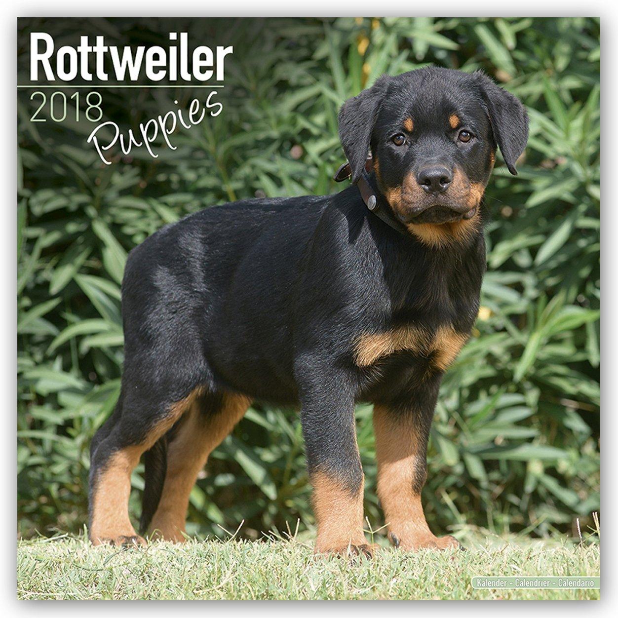 Rottweiler Puppies Calendar - Dog Breed Calendars - 2017 - 2018 wall Calendars - 16 Month by Avonside ebook