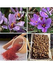 25 Saffron Bulbs Crocus Sativus Flowers Corms Original Turkey Bulbs Plant Bulbs