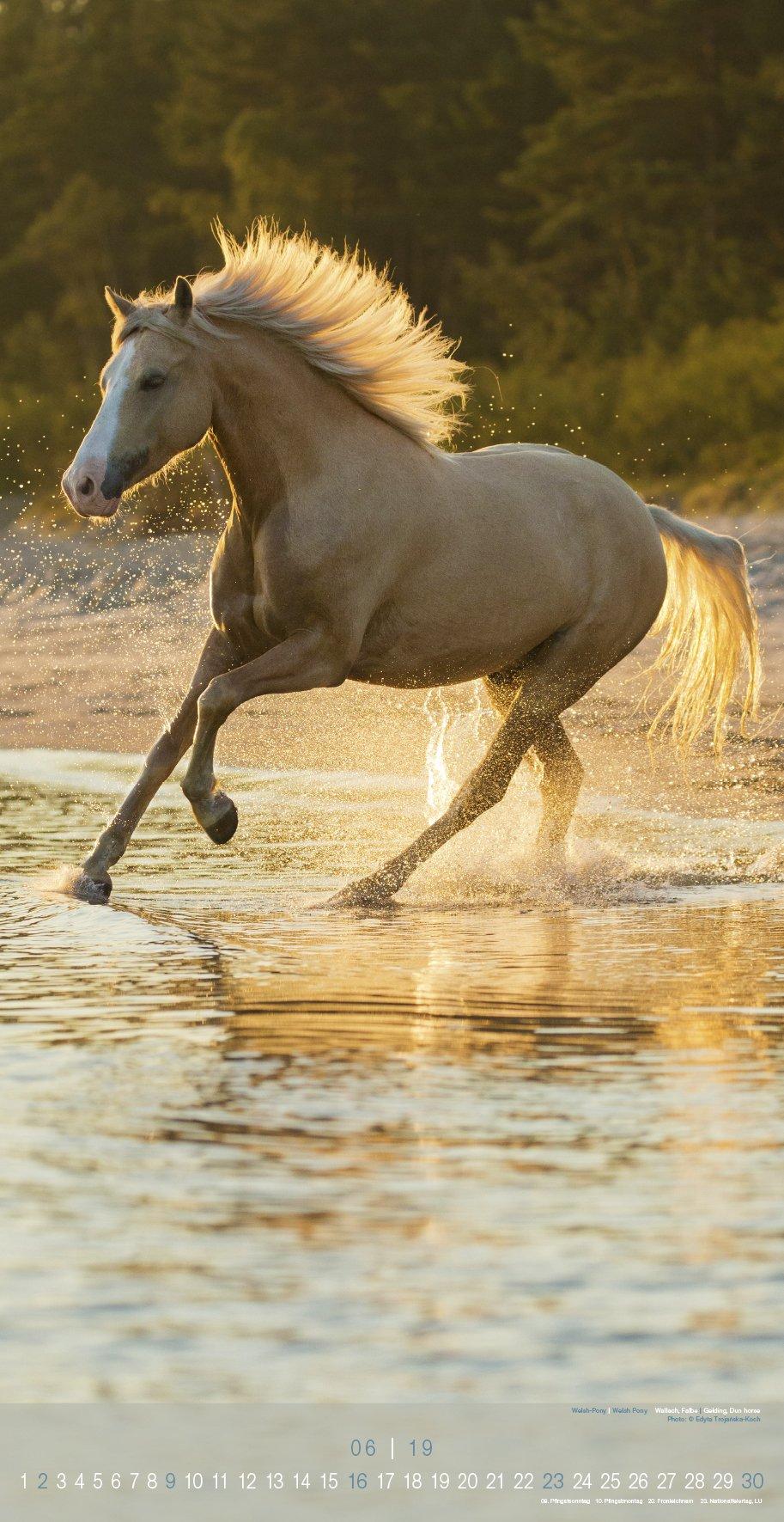 Beautiful Horses 2019 Wandkalender: Wild und Schön: Amazon ...