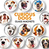 Fridge Magnets Funny Dogs – Glass Decorative Magnets for Fridge – Cute Locker Magnets for Girls and Boys – Refrigerator Magne