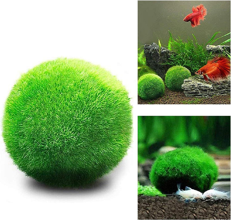 Gigicloud Marimo - Sfere di muschio di marimo, palline di muschio di marimo, belle e a bassa manutenzione, per piante acquatiche vive, per piante acquatiche, per uso domestico
