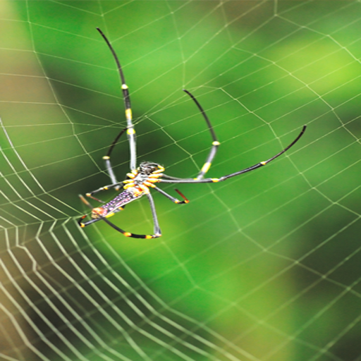 Spider Pictures - 6