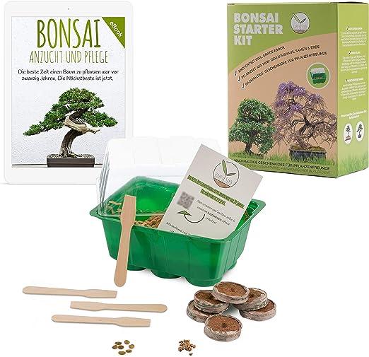 Bonsai Kit incl. eBook GRATUITO - Set de plantas con mini ...