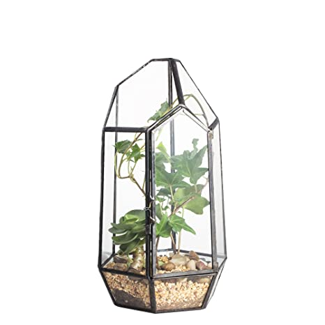 Amazon Com 8 66 Height Closed Irregular Glass Terrarium With Door