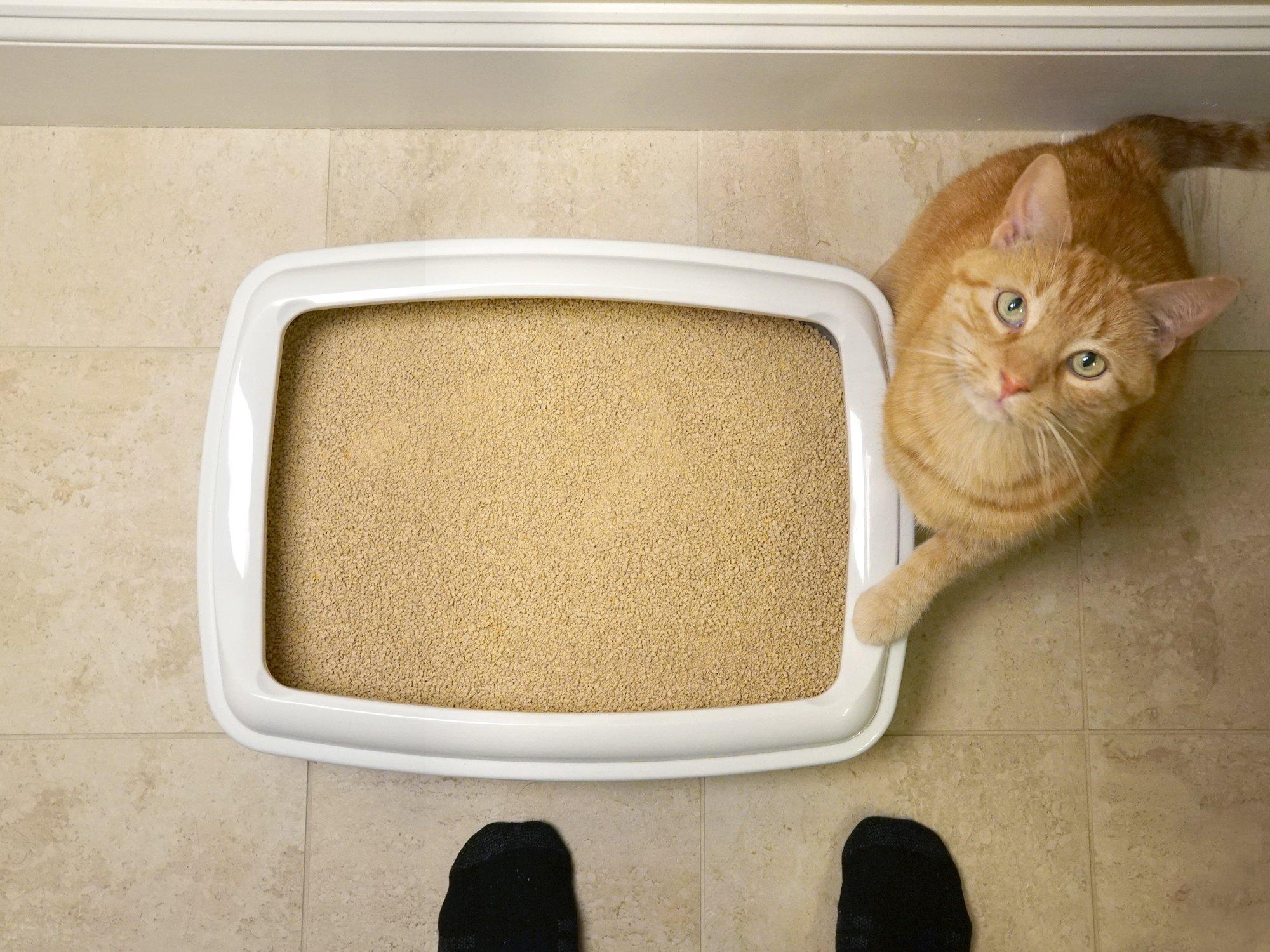 World's Best Cat Litter, Clumping Litter Formula, 28-Pounds