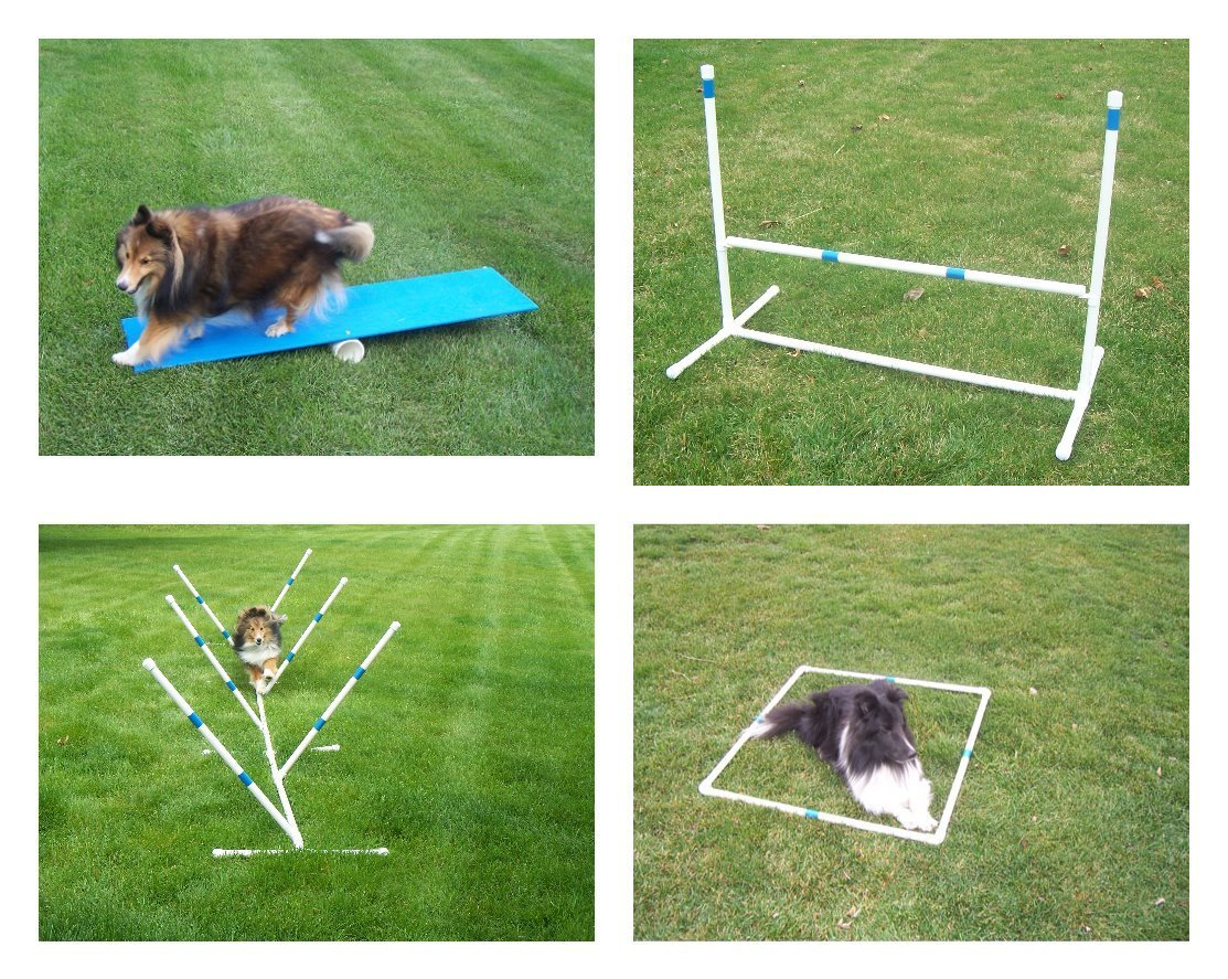 Agility Gear Starter Package - Med to Large Dogs