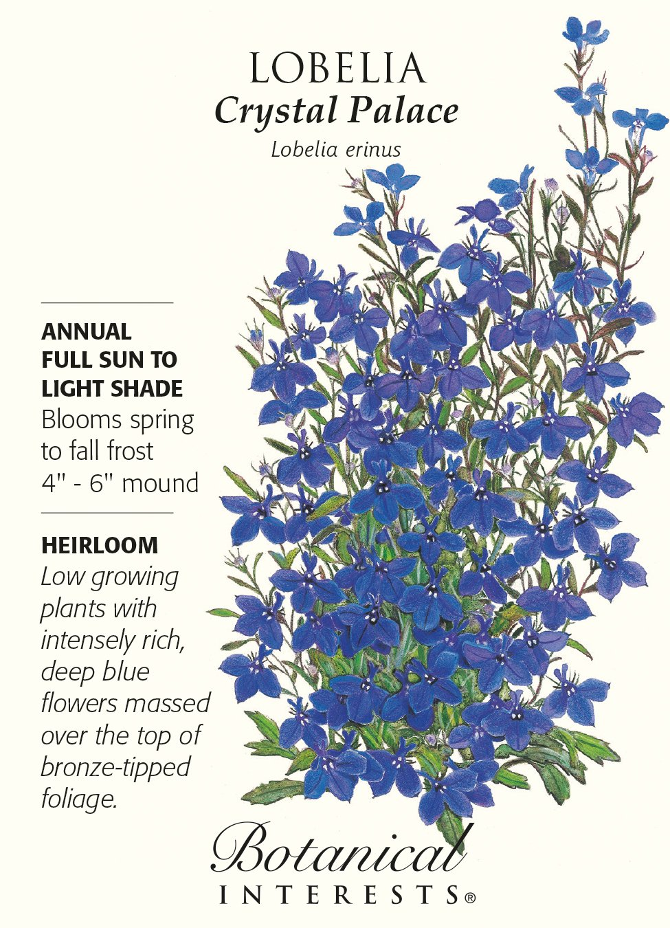 Amazoncom Crystal Palace Lobelia Seeds 125 Mg Annual