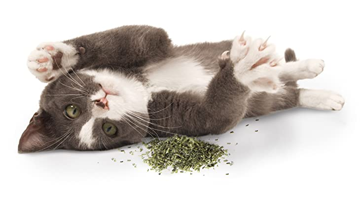 best Catnip For Cats